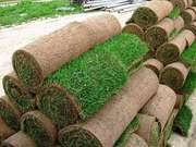 Рулонный газон в Минске